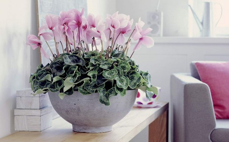 Совет 1 цветы