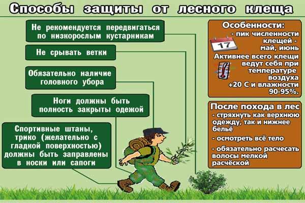 Защита от лесных клещей-способы
