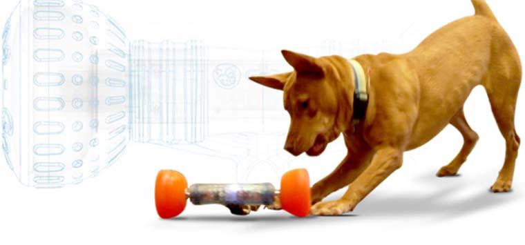 Представлена первая в мире «умная кость» для собак
