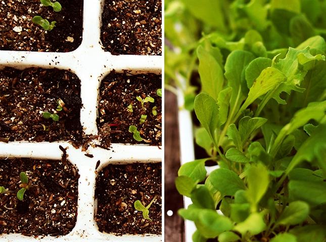 Применение формочек для льда-для выращивания зелени