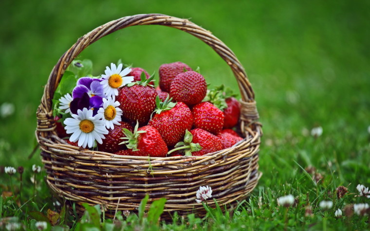 Сезон клубники-ягода лакомство