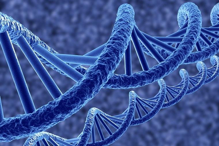 Создана первая в мире живая биофлешка ДНК