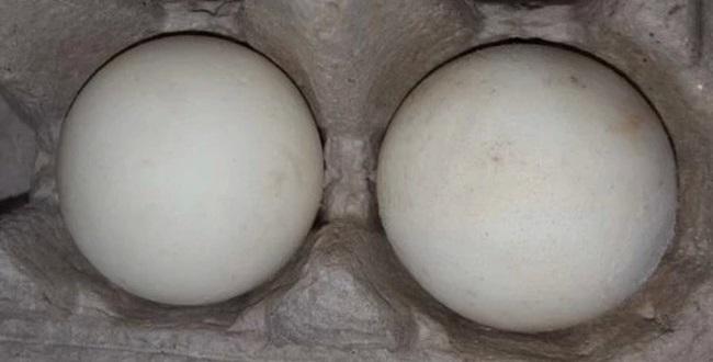 Слева – искусственное яйцо, справа – настоящее