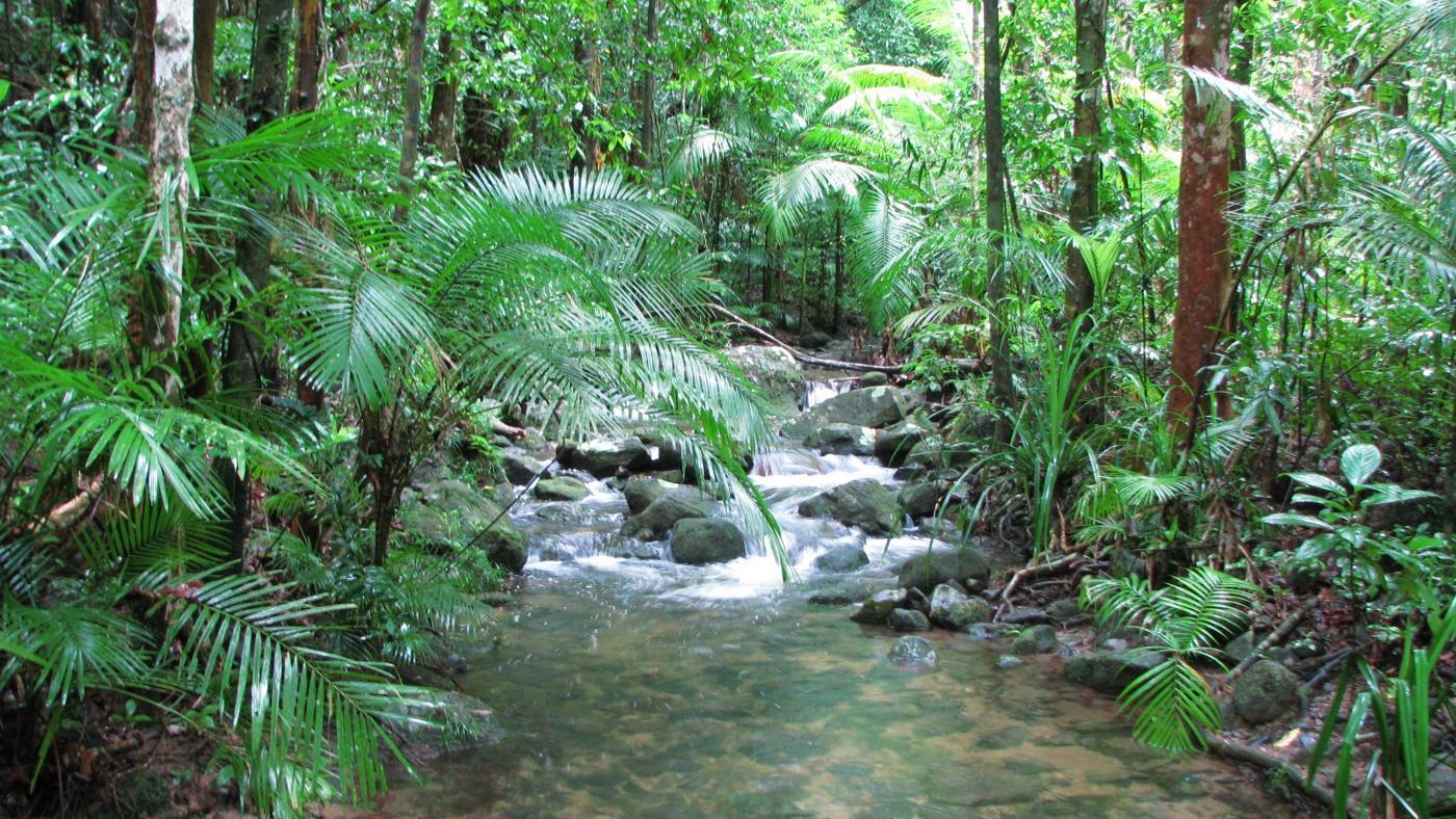 Обыкновенное чудо — пять мифов об увлажнителях воздуха – влажный тропический лес