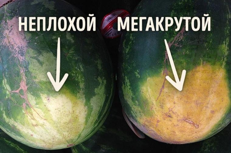 Папка «Фотографии», фото Как выбрать вкусный арбуз-земляное пятно