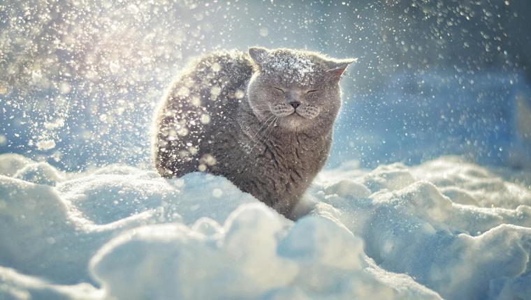 khvataet-snega-zimojj