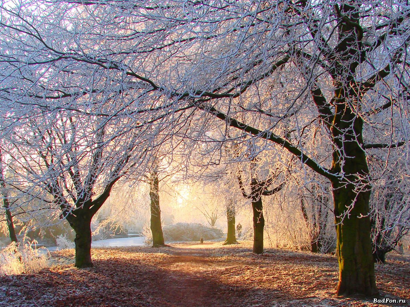 papka-foto-chto-est-zimojj-poleznye-sezonnye-produkty-zimnie-derevya
