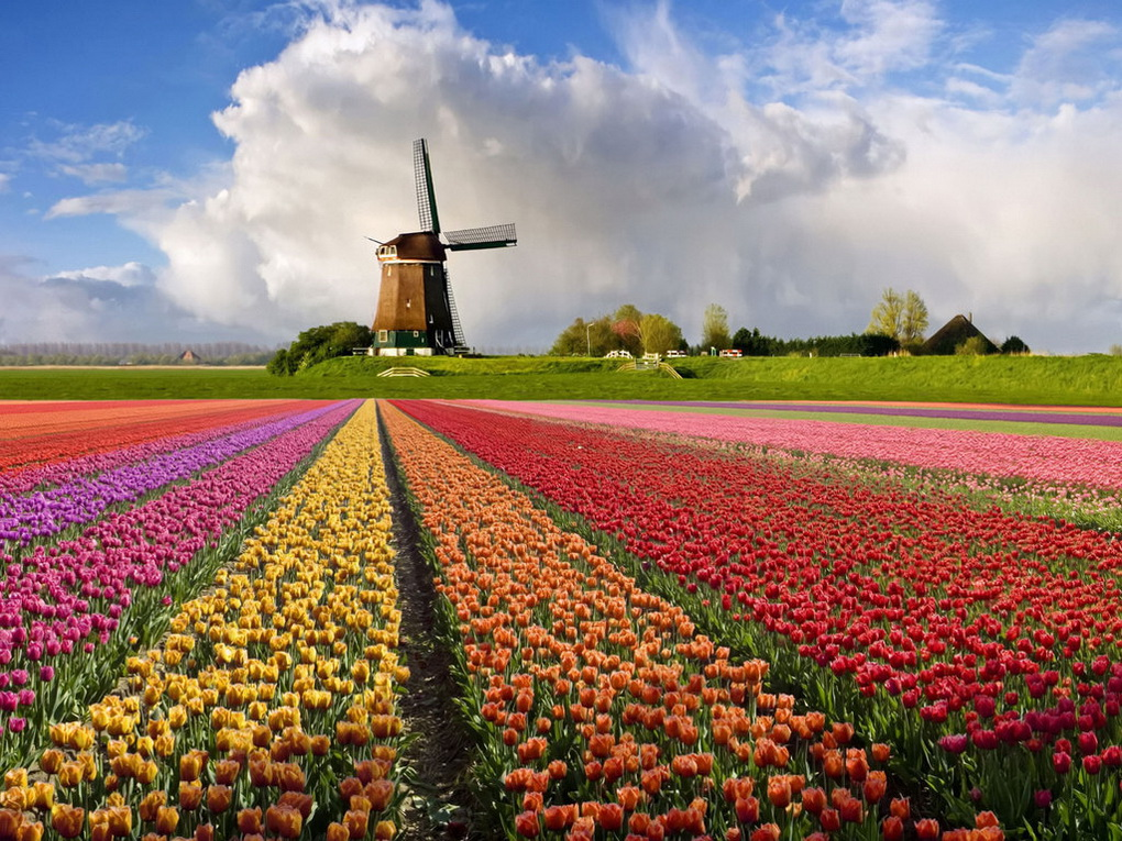niderlandy-foto