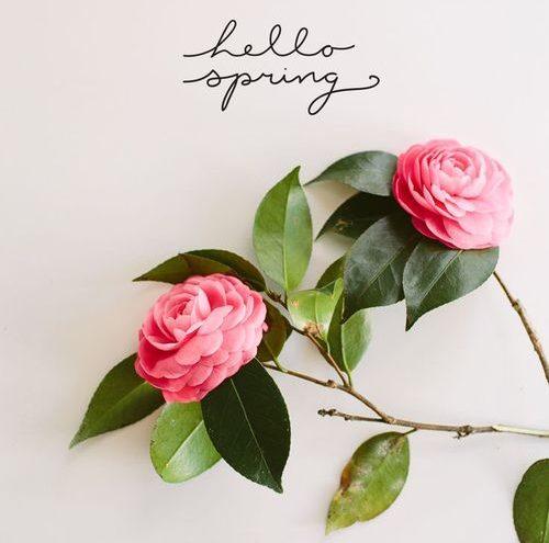 hello-spring-photo
