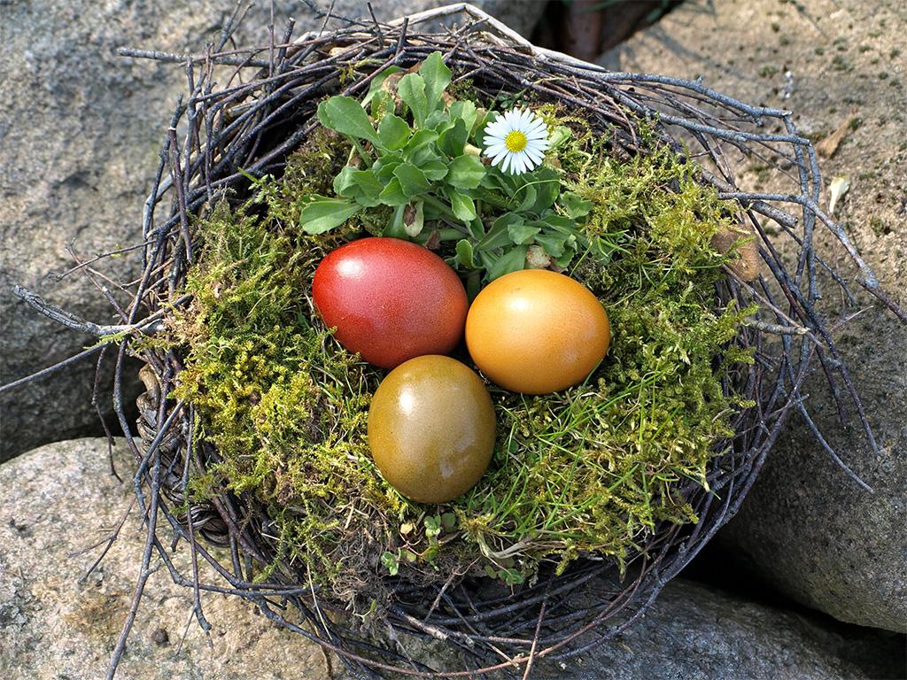 Пасхальные гнезда-фото