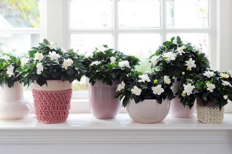 cvety-na-podokonnike-vesna-v-dome