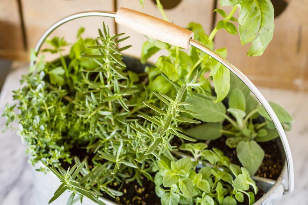 easy-indoor-herb-garden