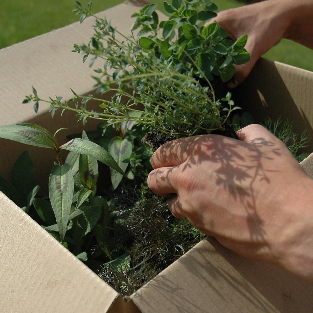 herb-garden-rassada