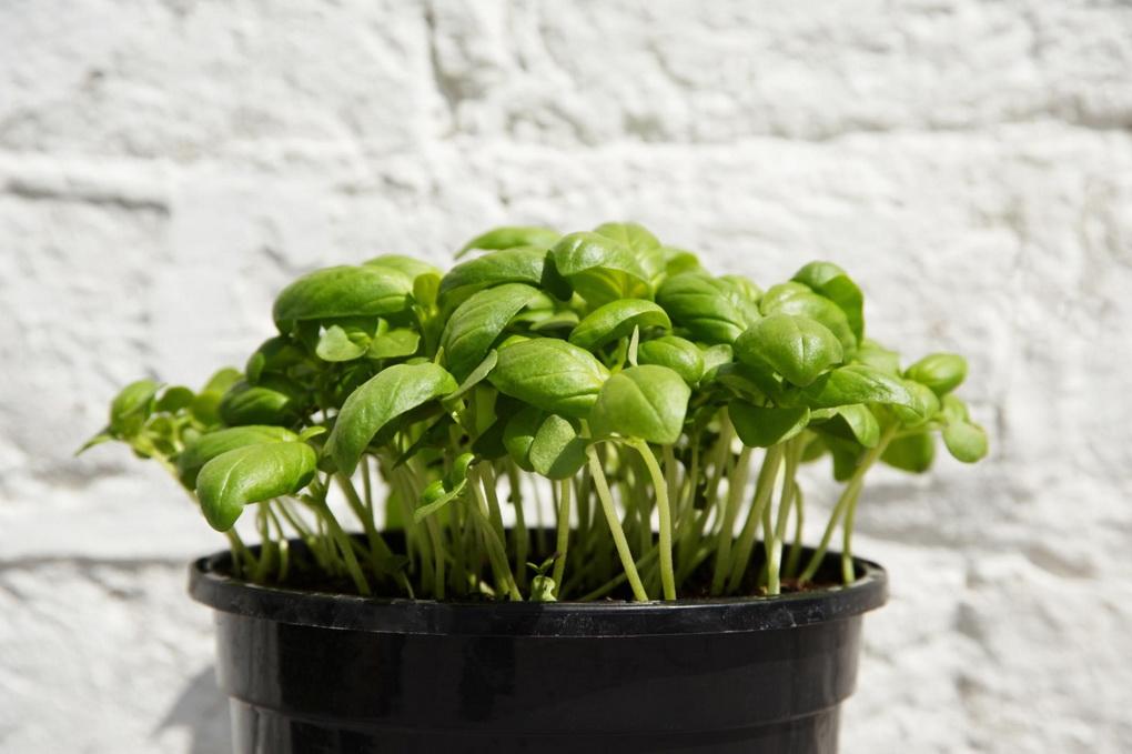 herb-garden-osveshhenie