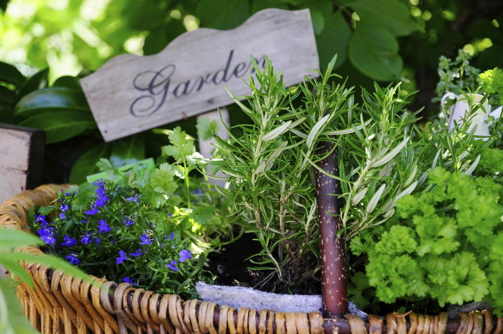 herb-garden-photo