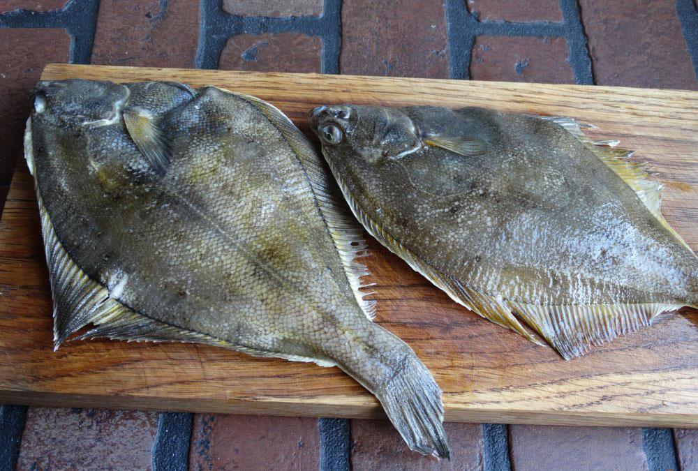 kambala-ryba