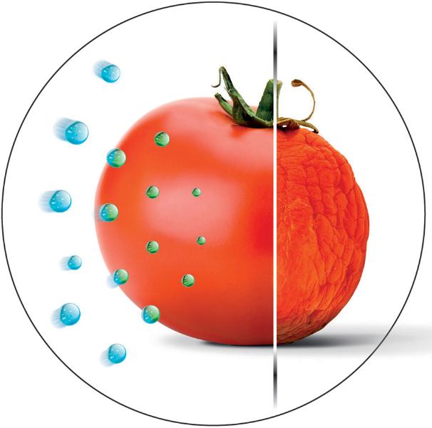 modulnyjj-kholodilnik-gorenje-sokhranenie-svezhesti