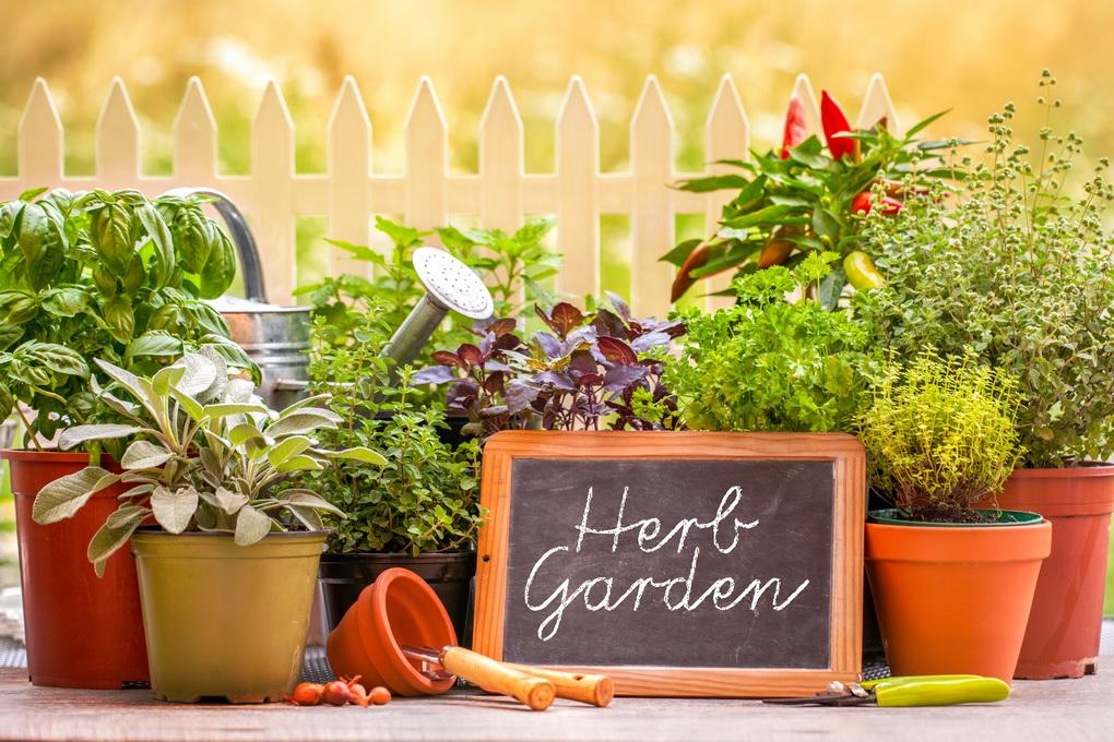 Огород на подоконнике-зелень круглый год