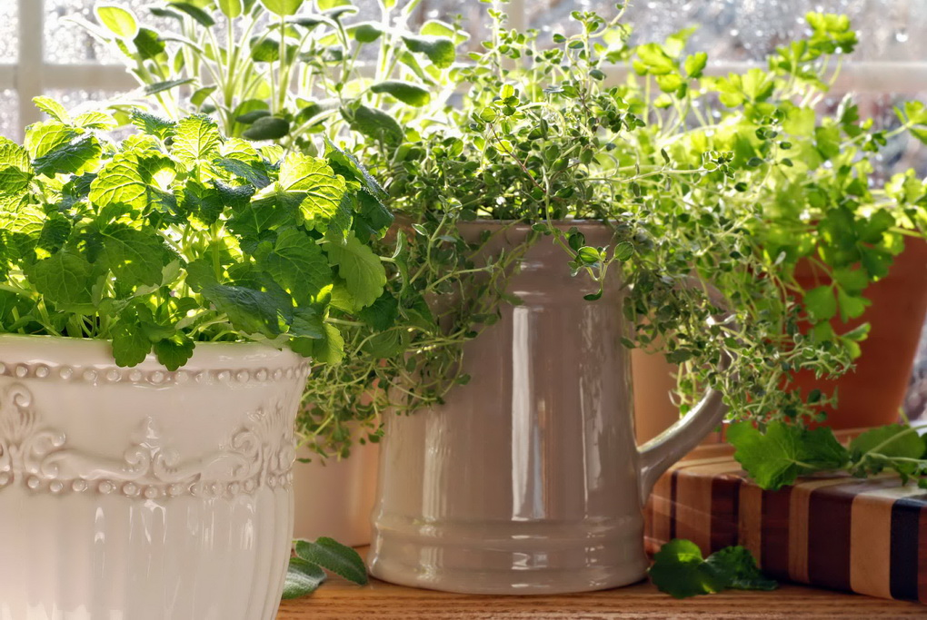 Kitchen herb garden with lemon balm, sage, parsley and thyme pot