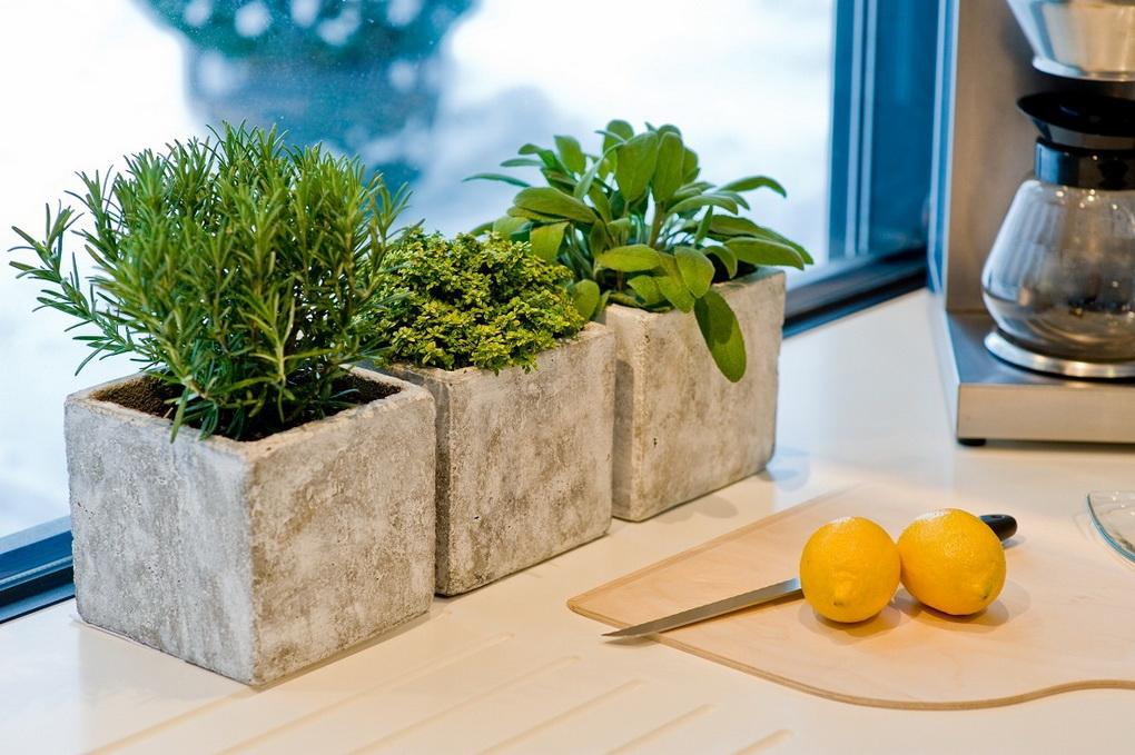 Выращиваем травы на кухне-зелень на подоконнике