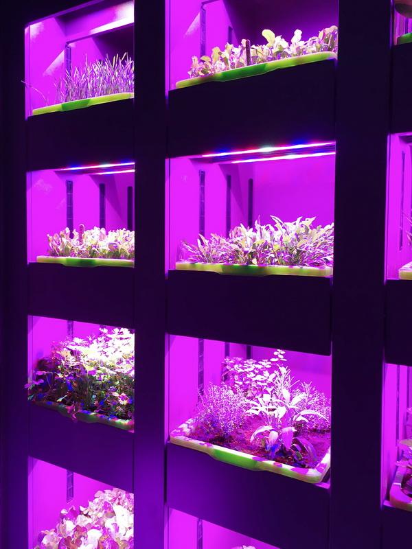 Выращивание зелени на кухне-подсветка.