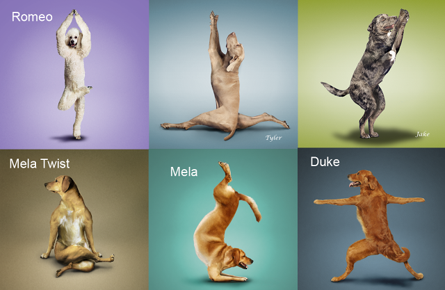 Дога-йога-фото