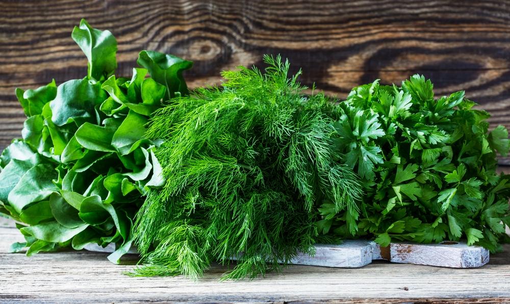 Папка «Фото», Сезонные продукты-летний режим питания – травы.