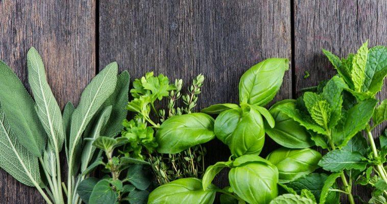 Витамины круглый год: выращиваем зелень на кухне