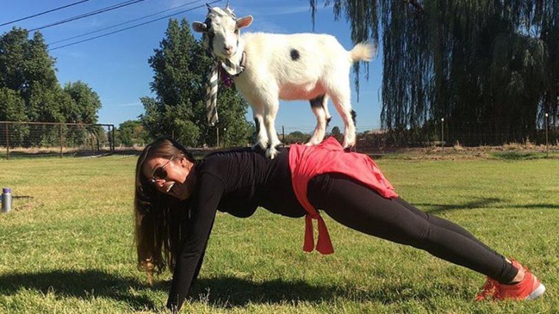 Йога с козами-фото 6
