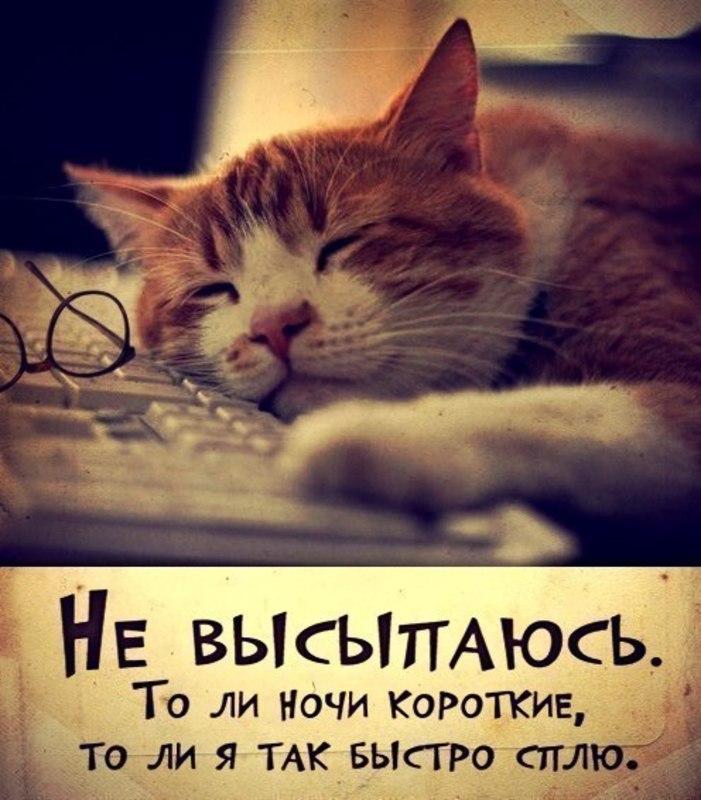 Кот-сон