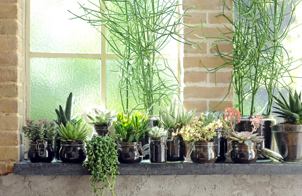 Папка «Фото», Готовимся к жаре- 10 способов охлаждения дома – много цветов на окне.