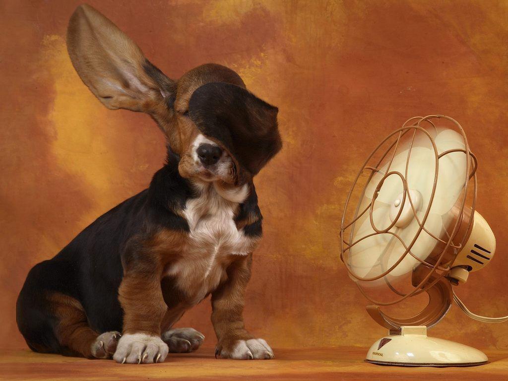 Папка «Фото», Готовимся к жаре- 10 способов охлаждения дома – собачке отлично.
