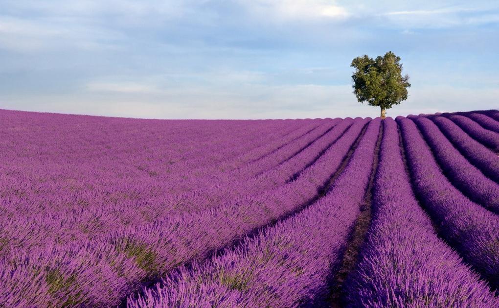 Прованс-Франция