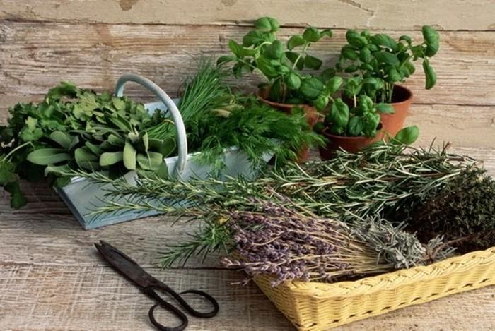 Травки для травяной подушки-фото