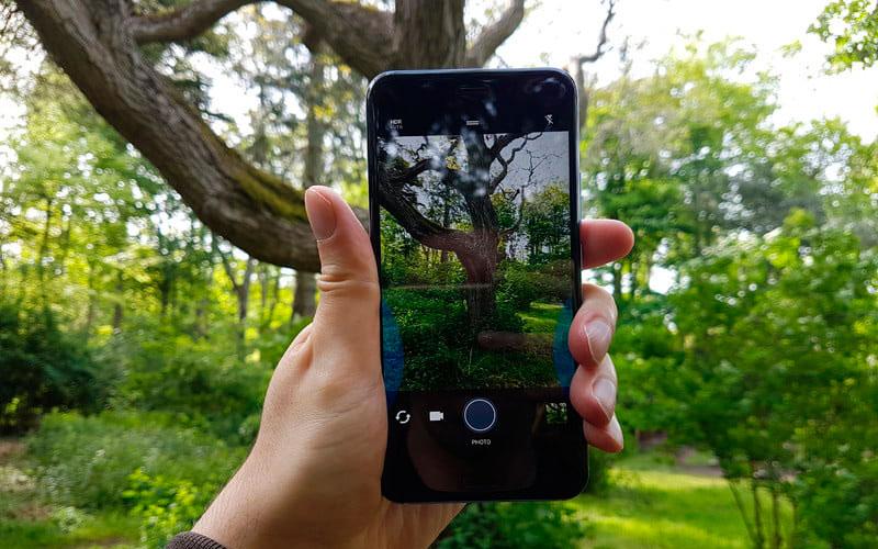 Обзор HTC U11 - фотография на природе
