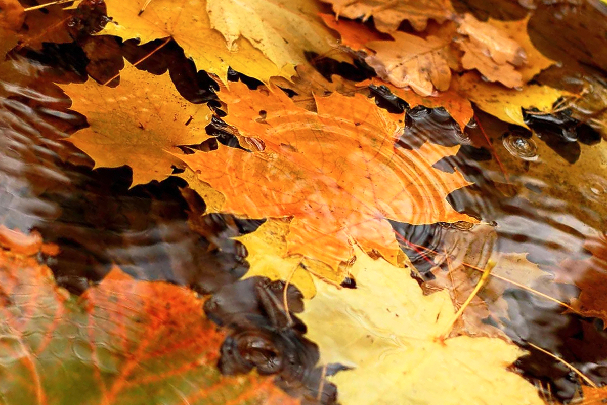 Папка «Фото», Сезонные продукты-осенний режим питания – дождливая осень.