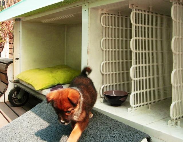 Старый холодильник-временный дом для бездомной собаки