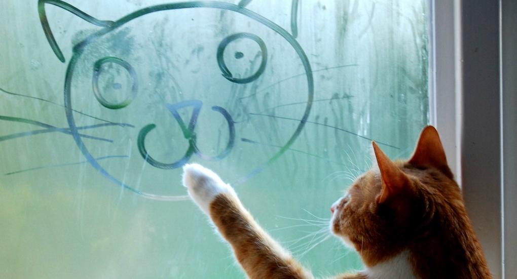 Автопортрет-кот