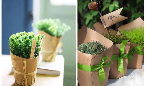 Подарок-зелень в горшочке
