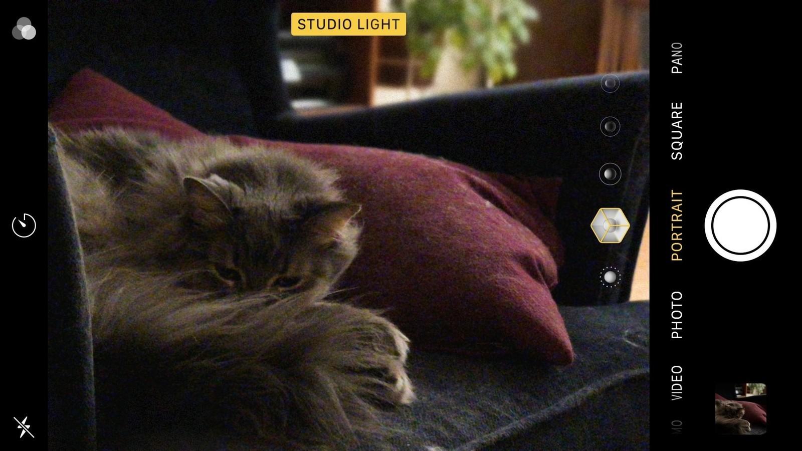 Как использовать портретный режим и портретное освещение в iPhone X - Портретное фото животного