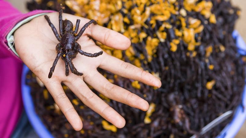 Жареные пауки-удивительные лакомства мира