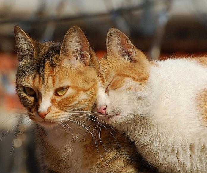 Мартовские коты-весна на улице