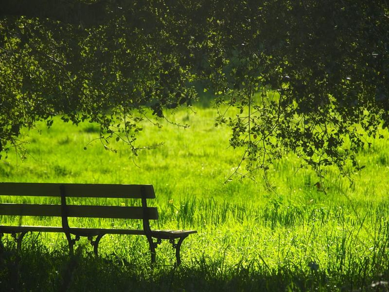 Природа-сочная зелень