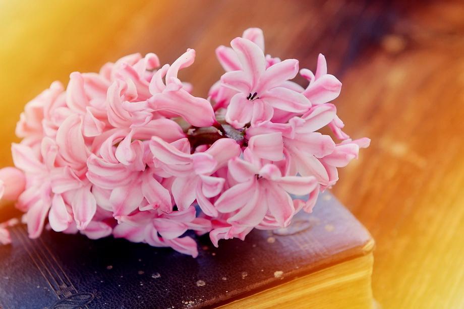 Розовый гиацинт-весенний мини-букет