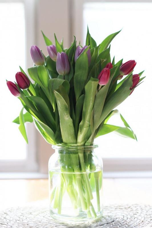 Тюльпаны-фото