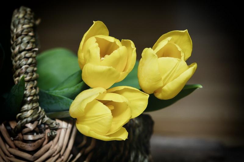 Тюльпаны-цветы к 8 марта фото 2