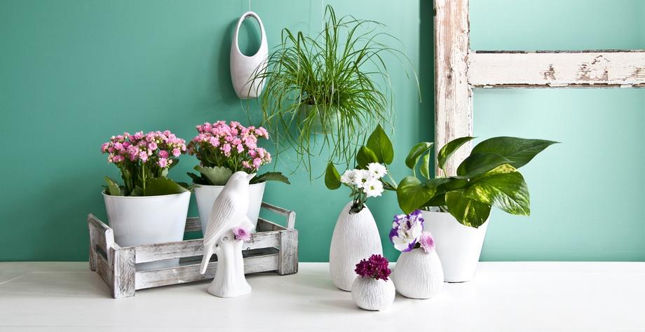 Живые цветы-декор