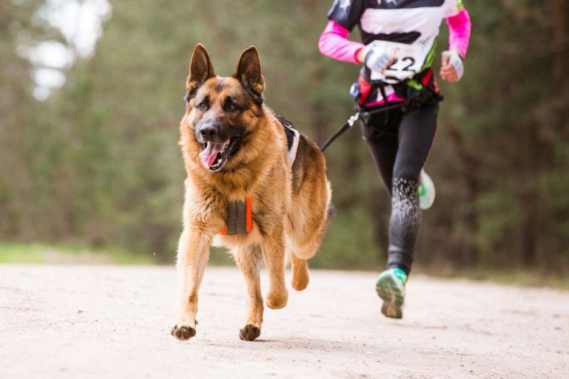 Каникросс-бег с собакой