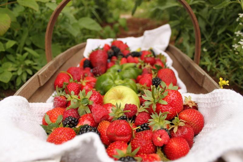 strawberries-fruitapples berries