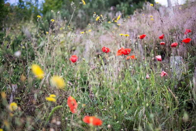 wildflower-summer